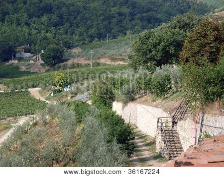 Vineyards and olive fields in Chianti Tuscany poster