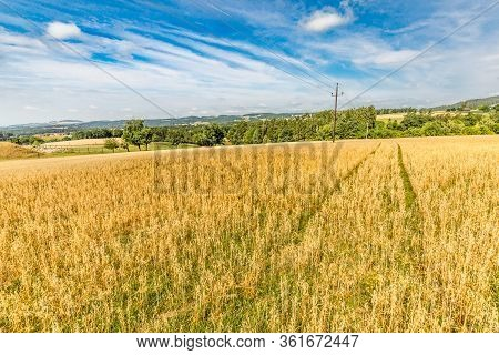 Golden Field Of Wheat On The Background Of Infinite Cloudy Blue Sky