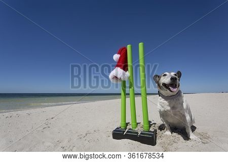A Happy Old Dog Sitting By Cricket Wickets.