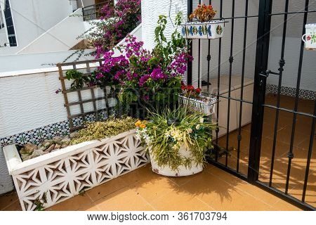 Potted Plants On Patio In Front Of Spanish Apartments