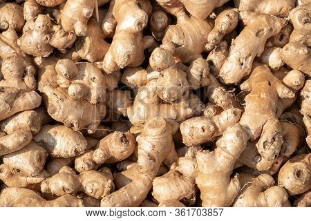 Fresh Organic Ginger On Market.ginger Is An Herb.ginger Is Used For Cooking Food And Beverages.