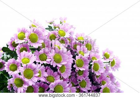 Close Up Of Small Purple Daisy Flowers Bouquet For Background