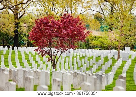 Rows Of Tombs And Graves On Military Cemetery At Spring In Arlington