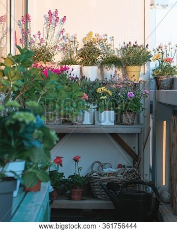 Balcony Plants And Flowers, Small Balcony Ideas, Comcept, Balcony Trends, Beautiful Different Colore