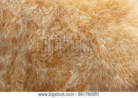 Shaggy Tan Fur Backdrop Texture Background Textured Skin