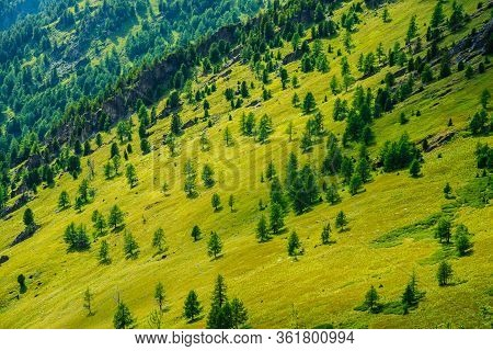 Green Mountain Scenery With Vivid Green Mountainside With Conifer Forest And Crags. Coniferous Trees