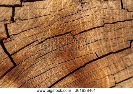Close-up Of Wooden Section Of The Trunk With Annual Rings. Background Or Texture. Slice Wood Of Frui