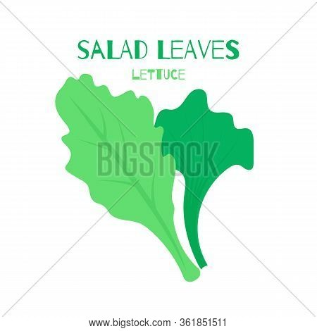 Bright Vector Illustration Of Colorful Lettuce Salad Leaves. Flat Style Organic Vegetable Isolated O