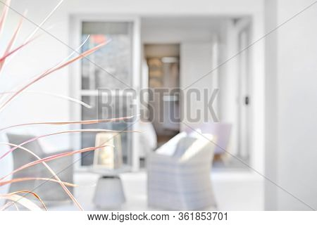 Fancy Plant Or Flower With Thin Leaves On A Blurred Background In  Front Of A House, Luxury Furnitur