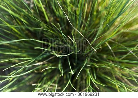 Green Tufted Grass View Full Screen From Above