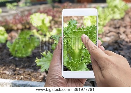 Smart Farming Business And Technology Concept. Agronomist Grower Hands Using Holding Smart Phone Tak