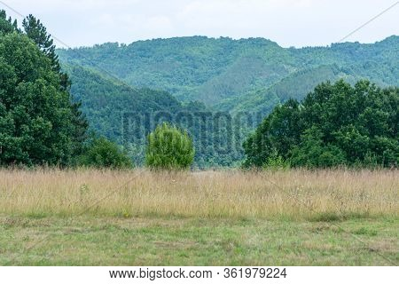 Wild Field Of Grass, Trees And Wavy Green Forest Hills Against Pale Sky