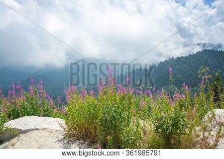 Lush Flowery Meadow And Green Hill Covered With Pine Trees And Pastures Against Fluffy White Clouds