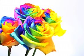 Bouquet Of Happy Flower : Rainbow Rose With Colored Petals