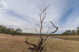 A Dead Tree On Dry Grass In Front Of A Fresh Water Reservoir