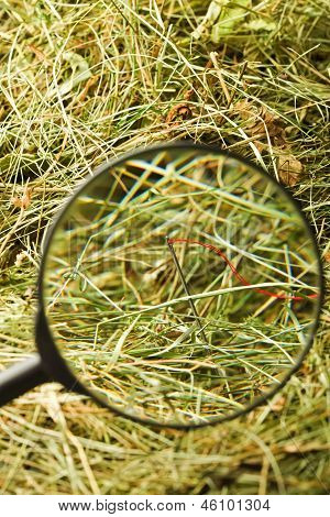 Neddle In The Haystack