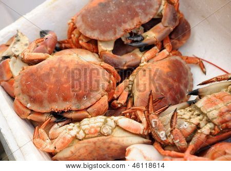 Cooked crab on the fishmongers stall