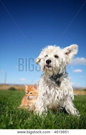 Katten- en hondenbont