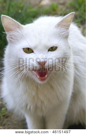 white cat hunter