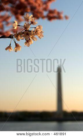 DC Blossom Sunrise