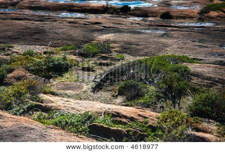 Low Vegetation On Cliffs At Canal Rocks Yallingup, Western Australia