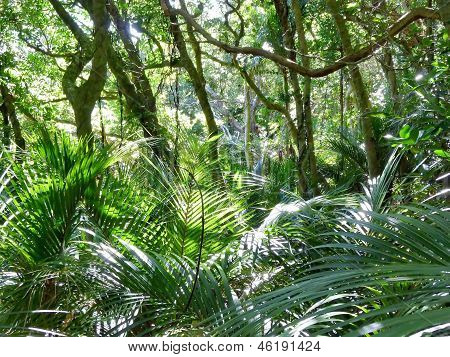 Bushland with palms