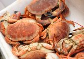 Cooked crab on the fishmongers stall, cooked and ready for the table. poster