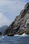 A small Island about 8 miles from the west coast of Kerry, Ireland. It has the second largest colony of gannets in the world and is a breath taking sight. I loved the cliff dropping into the Atlantic and the gannets diving for fish like spears. poster