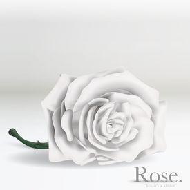 White Vector Rose flower on background