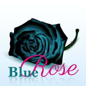 Blue Rose On white Background with Text