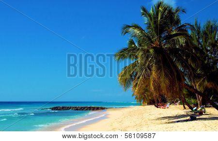 Palms of Honduras
