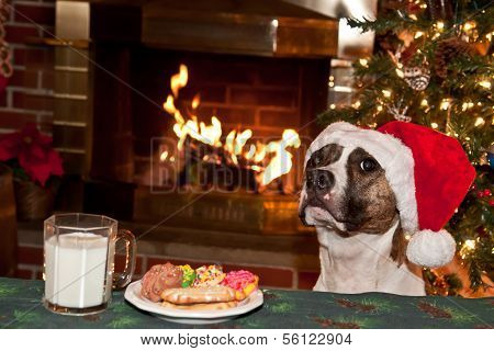 Dog Begging for Cookies