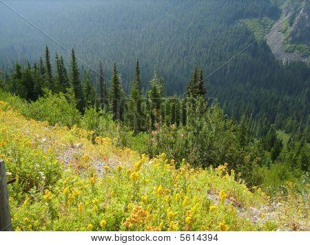 001 Chinook Pass
