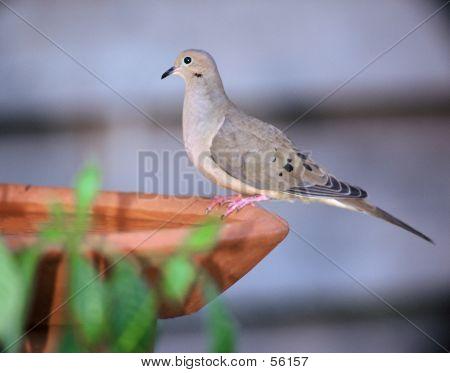 Sitting On Bird Bath