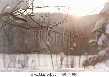 Wonderful Sunny Winter Scene