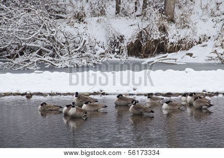 Geese Resting in River after a Fresh Snowfall poster