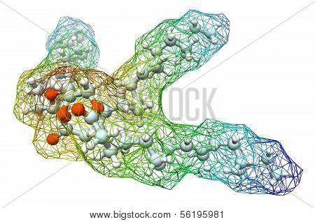 Triglyceride Molecule
