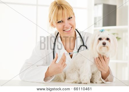 At The Veterinary