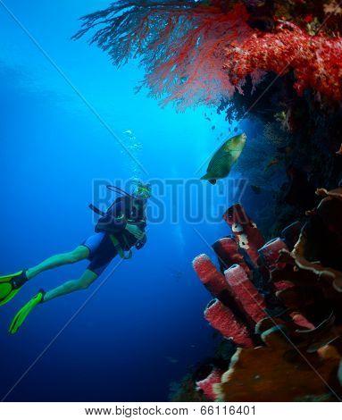 Scuba diver exploring tropical reef wall on the depth