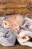 Cute little red kitten  sleeping on soft plaid, on wooden background poster