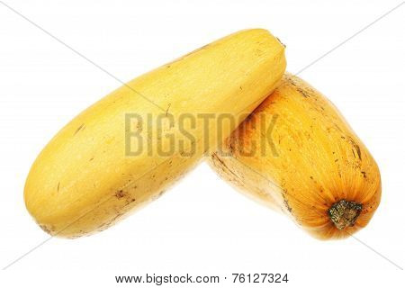 Two Ripe Zucchini
