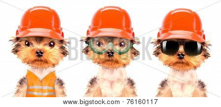 dog  dressed as builder isolated on a white background poster