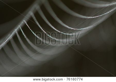 Spiderweb with Dew