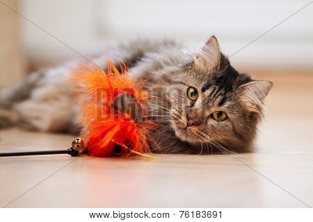 The Fluffy Cat Plays With A Toy.