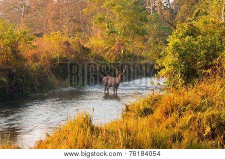 Jungle Scenery