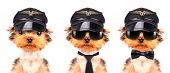 dog  dressed as pilot on a white background poster
