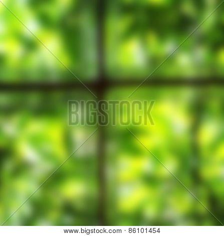Defocused green background of woodbine
