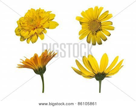 Four Asteraceae Isolated