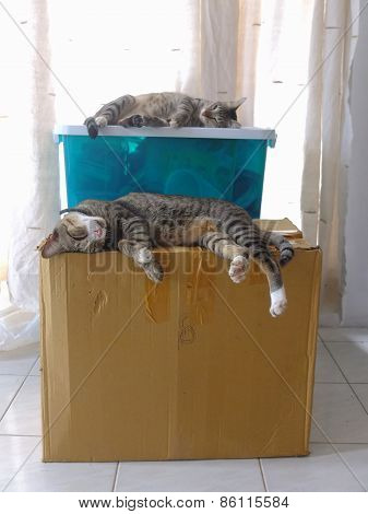 Cats sleeping on boxes