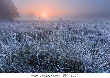 Beautiful Morning With Frost On Plants. Autumnal Landscape.